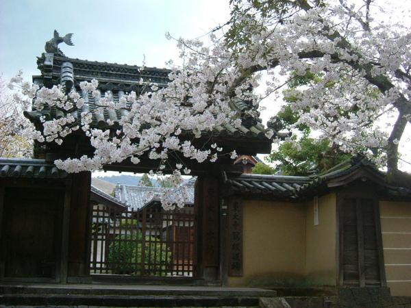 2007.04 奈良公園 (16).JPG