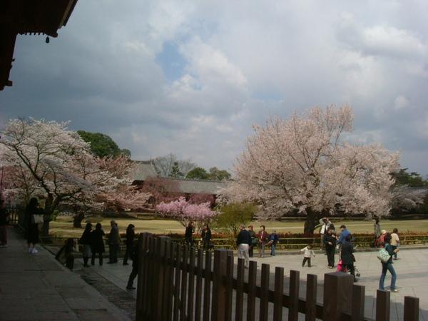 奈良東大寺 (23).JPG