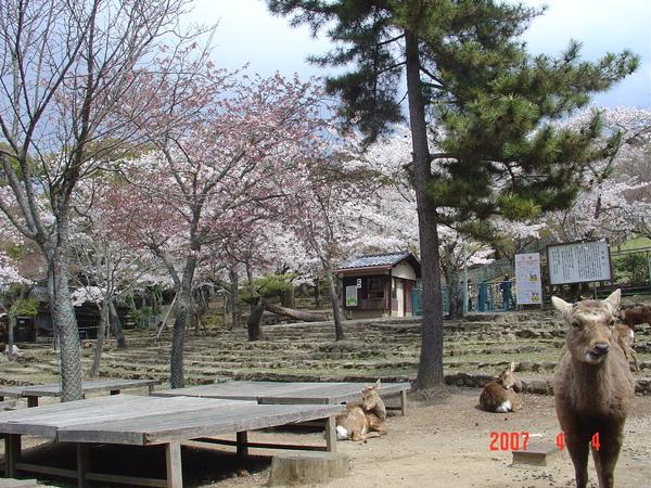 4-4 若草山-(2).JPG