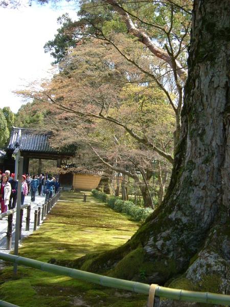 金閣寺-京都   (8).JPG