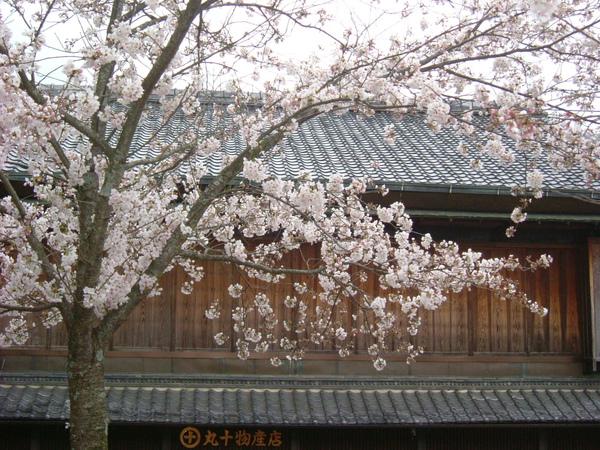奈良若草山 (1).JPG