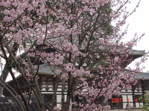 4-4奈良公園及東大寺 -(19).JPG