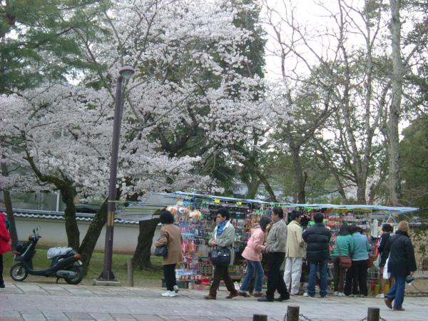 2007.04 奈良公園 (17).JPG