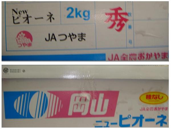 200910-日本葡萄 .jpg