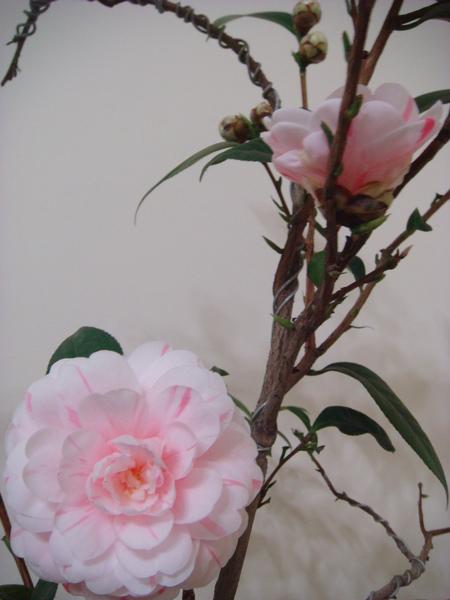 茶花 (4).JPG