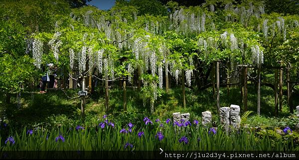 萬葉植物園.png