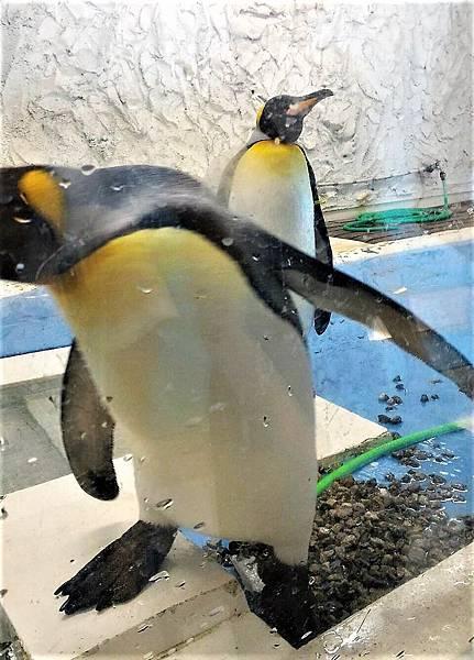 大阪動物園企鵝.jpg