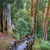 阿里山森林遊樂區 阿里山神木群 10501.jpg