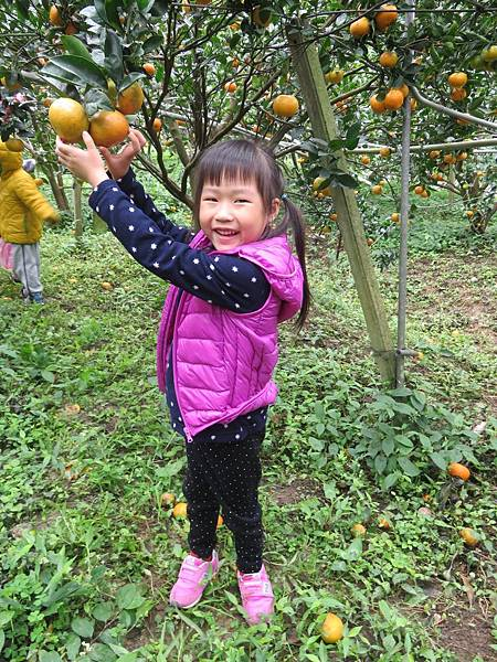 20180131採橘趣+大班+小班_180202_0111.jpg