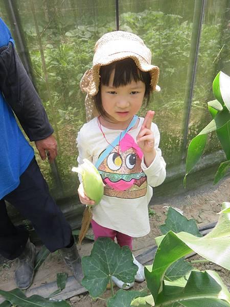 0605玉米_8.jpg