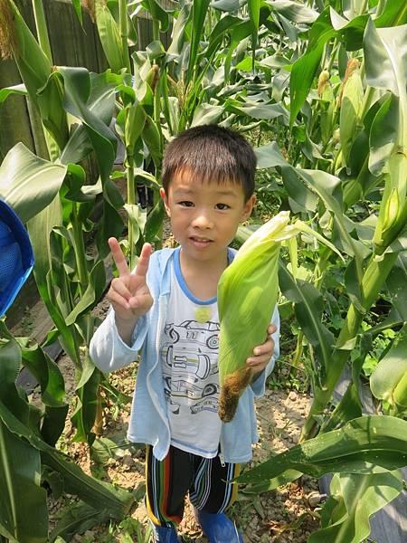 0605玉米_46.jpg