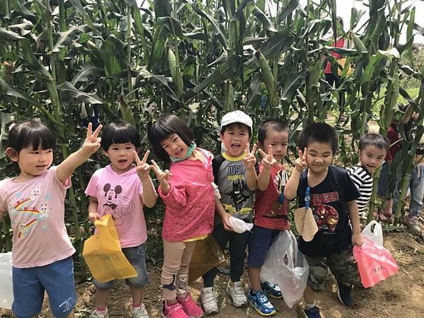 小班玉米 (15).jpg
