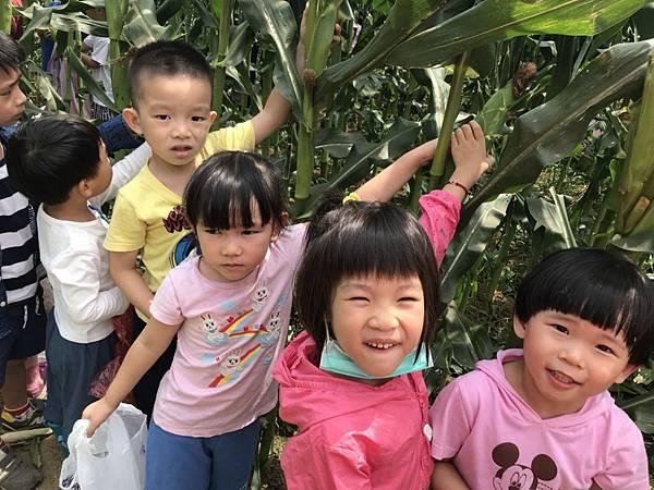 小班玉米 (24).jpg