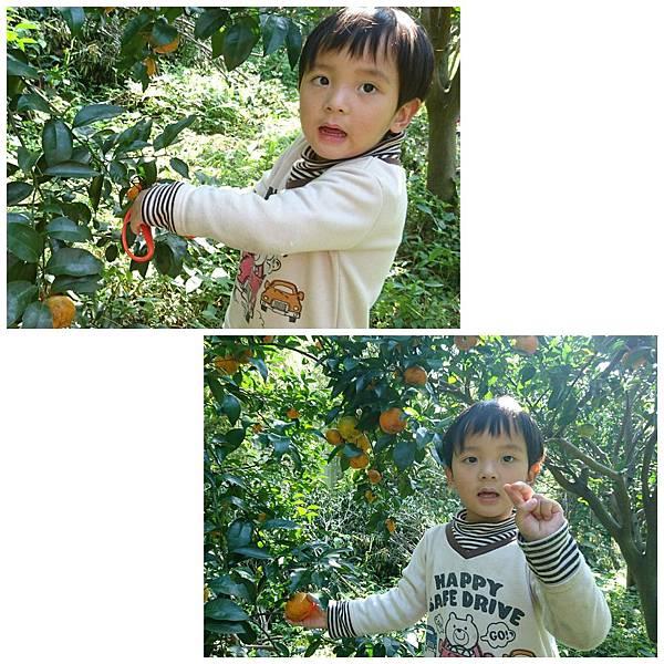 2019119新竹採橘趣_190119_0018.jpg