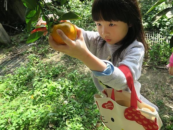 0119採橘子大班_190119_0007.jpg