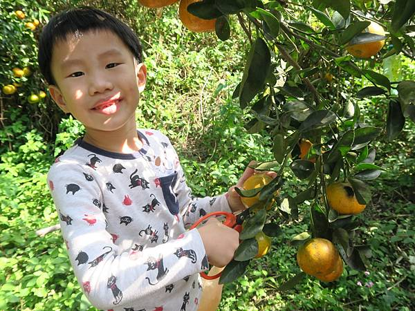0119採橘子大班_190119_0022.jpg