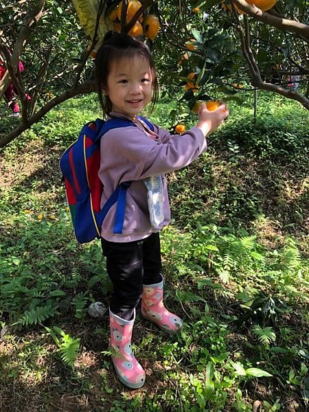 2019.01.19 採橘子_190119_0026.jpg
