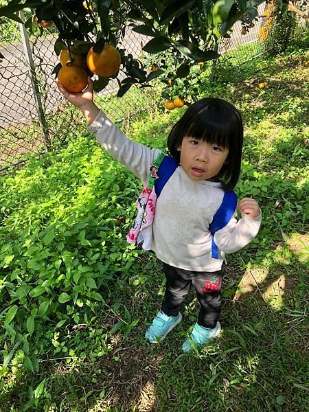 2019.01.19 採橘子_190119_0028.jpg