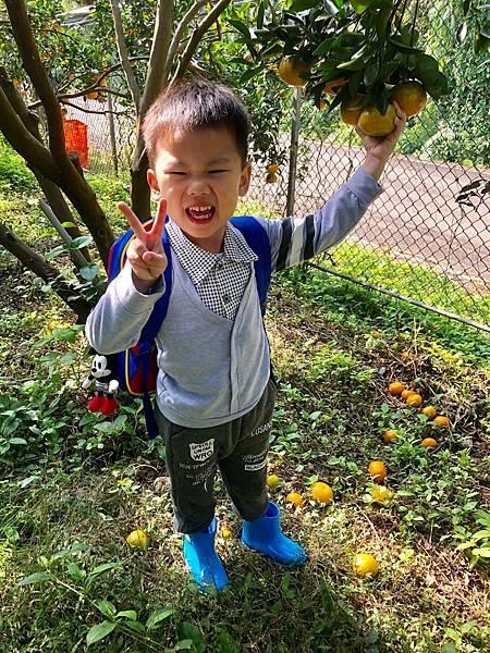 2019.01.19 採橘子_190119_0038.jpg