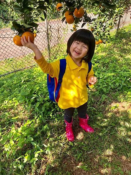 2019.01.19 採橘子_190119_0030.jpg