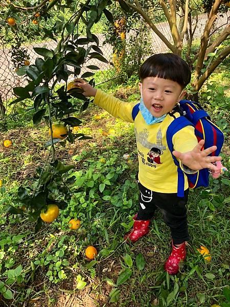 2019.01.19 採橘子_190119_0034.jpg