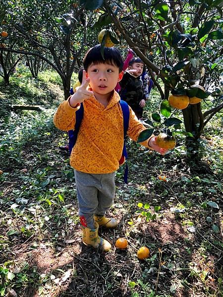 2019.01.19 採橘子_190119_0043.jpg