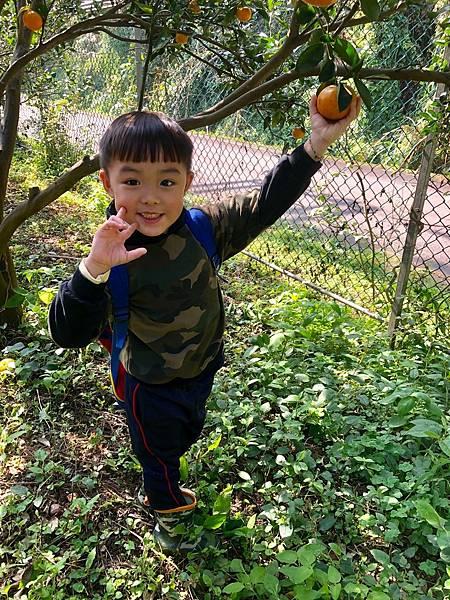2019.01.19 採橘子_190119_0052.jpg