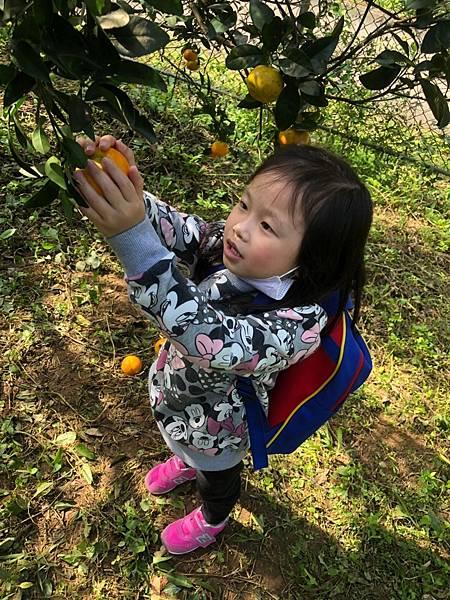 2019.01.19 採橘子_190119_0056.jpg