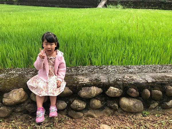 0530大班看稻子_190531_0108.jpg