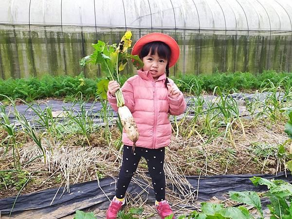蘋果~拔蘿蔔_200211_0018.jpg
