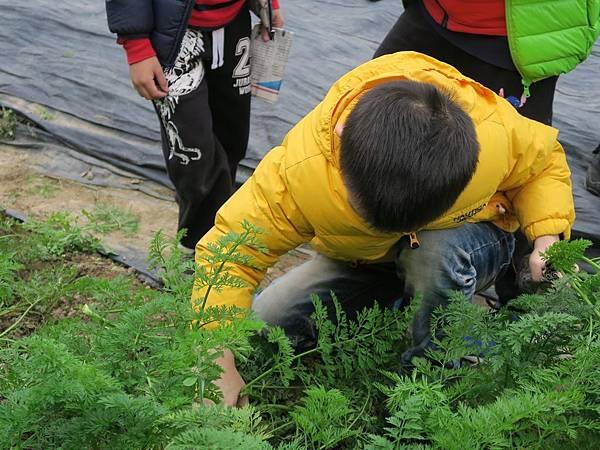 拔蘿蔔_200211_0049.jpg