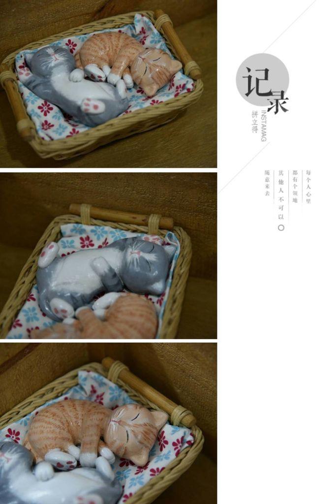 x@130慵懶的貓2.jpg