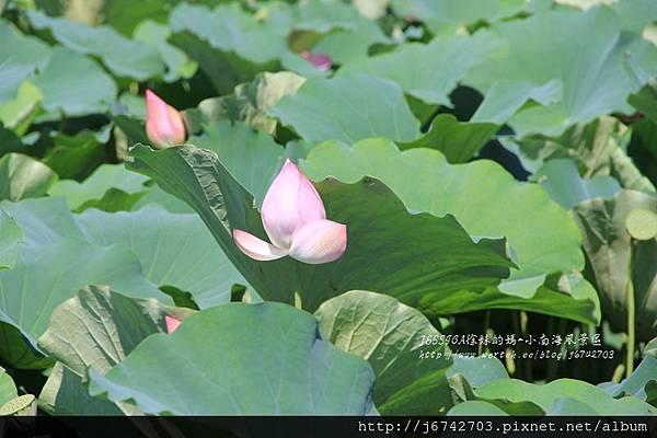 小南海風景區 (48)