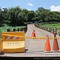 白河蓮花公園 (5)