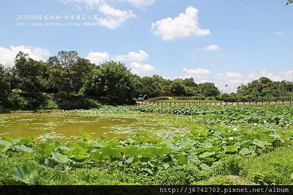 白河蓮花公園 (8)