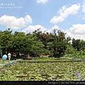 白河蓮花公園 (35)