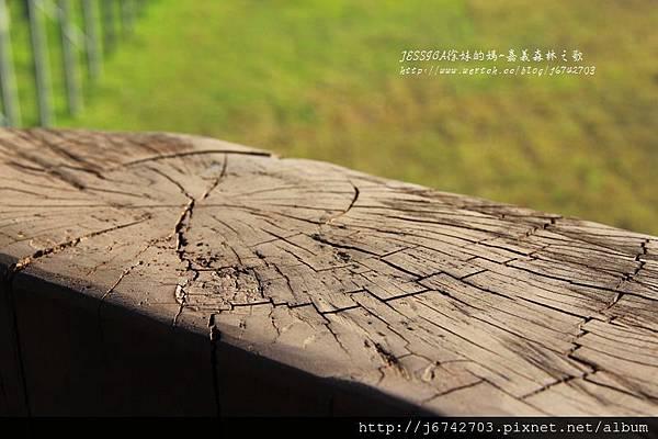 嘉義兒童館+森林之歌+嘉樂福夜市 (66)