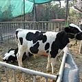 2009.1.28年初三走馬瀨農場 (41)