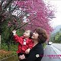 2009.2. 16台七丙線上的櫻花 (1)