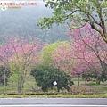 2009.2. 16台七丙線上的櫻花 (22)