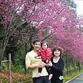 2009.2. 16台七丙線上的櫻花 (14)