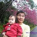 2009.2. 16台七丙線上的櫻花 (8)