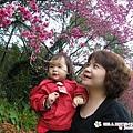 2009.2. 16台七丙線上的櫻花 (6)