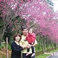 2009.2. 16台七丙線上的櫻花 (15)