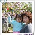 2009.3.21阿里山賞櫻 (33)