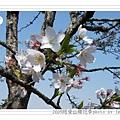 2009.3.21阿里山賞櫻 (74)