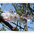 2009.3.21阿里山賞櫻 (73)