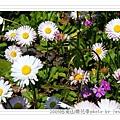 2009.3.21阿里山賞櫻 (84)