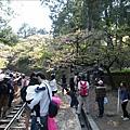 2009.3.21阿里山賞櫻 (47)
