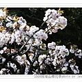 2009.3.21阿里山賞櫻 (35)